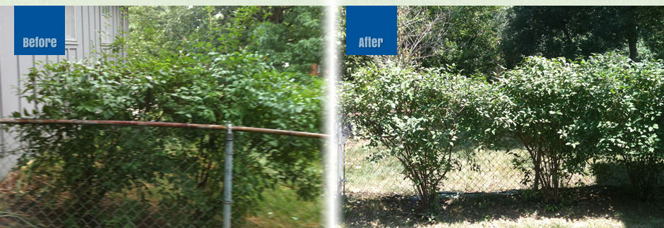 Beforer_After_bushes
